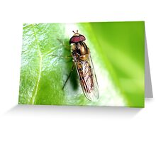 Hedgerow Insect Greeting Card