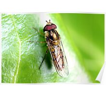 Hedgerow Insect Poster