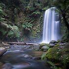 Beauchamp Falls, Otway Rangers, Victoria by susanzentay