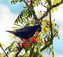 Tasty berries - image 3 of series 2 by missmoneypenny