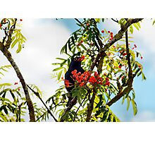 Tasty berries - image 1 of series 2 Photographic Print
