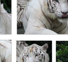 White Tiger Beauty Sticker