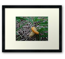 stand up straight Framed Print