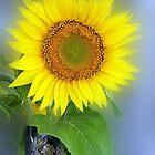 glowing sunflower by feiermar