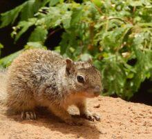 Squirrel portrait shot Sticker