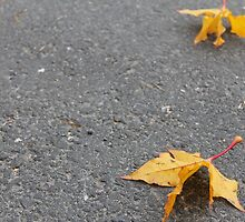 Zen. Autumn. by UpNorthPhoto