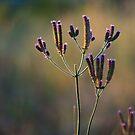 Wildflowers by Martie Venter
