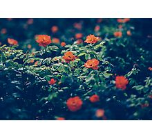 Moody Blooms Photographic Print