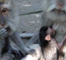 Balinese monkey family Sticker
