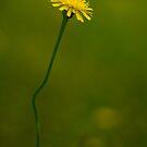Yellow Wildflower by Martie Venter