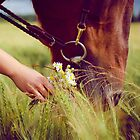 Horse Nose and Chamomile by Kate Vigdis