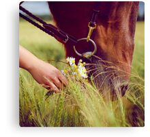 Horse Nose and Chamomile Canvas Print