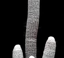 Spiny Cactus Fingers by Stephen Frost
