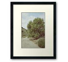 The Wishing Tree Framed Print