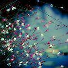 Monet's Dream by anniephoto