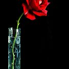 Single Red Rose by Martie Venter