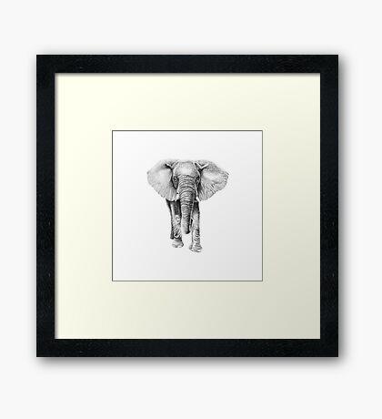 African Elephant Illustration Framed Print