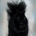 Black Squirrel by Rosemary Sobiera