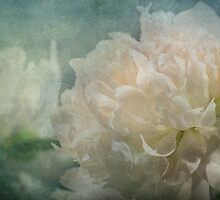 Peony for Star by Dawn Crouse
