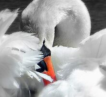 2014 Calendar -  Waterbirds  by naturelover