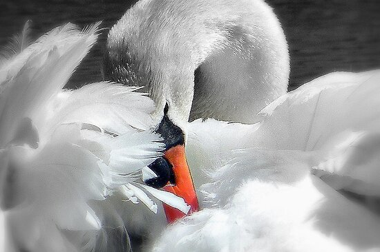 Soft As A Feather!  by naturelover