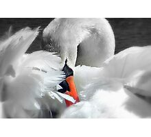 Soft As A Feather!  Photographic Print