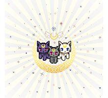 Sailor Cats - Blue Photographic Print