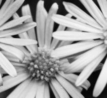 Triple daisy print Sticker