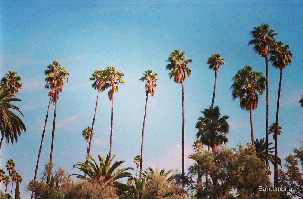 palm trees again by Santamariaa