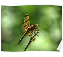 Halloween Pennant Dragonfly. Poster