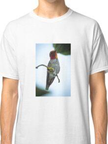Anna's Hummingbird Classic T-Shirt