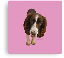 Millie, Springer Spaniel Canvas Print