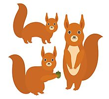 Fluffy Squirrels Photographic Print