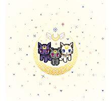 Sailor Cats - Stripe less  Photographic Print