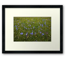 A sea of Harebells, Rossbeg, Co Donegal Framed Print
