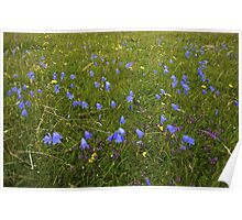 A sea of Harebells, Rossbeg, Co Donegal Poster