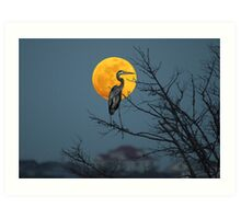 Super Moon and Great Blue Heron Art Print
