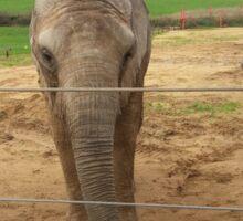 Elephants habitat Sticker