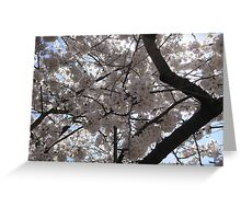 Cherry Blossoms Greeting Card