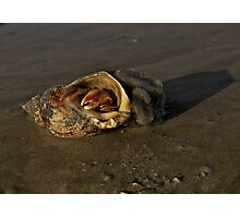 Hermit Crab on Fahan Beach Photographic Print