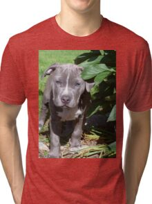 Gorgeous Baby Pit Bull Puppy Dog Tri-blend T-Shirt