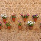The Flower Pots Of Valldemossa by Fara