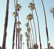 Santa Monica Palm Trees by amstar