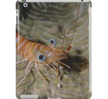 Prawn Portrait iPad Case/Skin