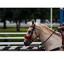 Saratoga - White horse Photographic Print