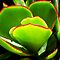 *Succulent - quick challenge - Enchanted flowers*