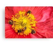 Poppy-go-round for bees! Canvas Print