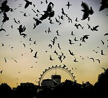 Birds Eye View  by dansLesprit