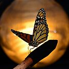 Monarch Butterfly by David Lee Thompson