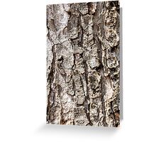 Tree bark Texture Greeting Card